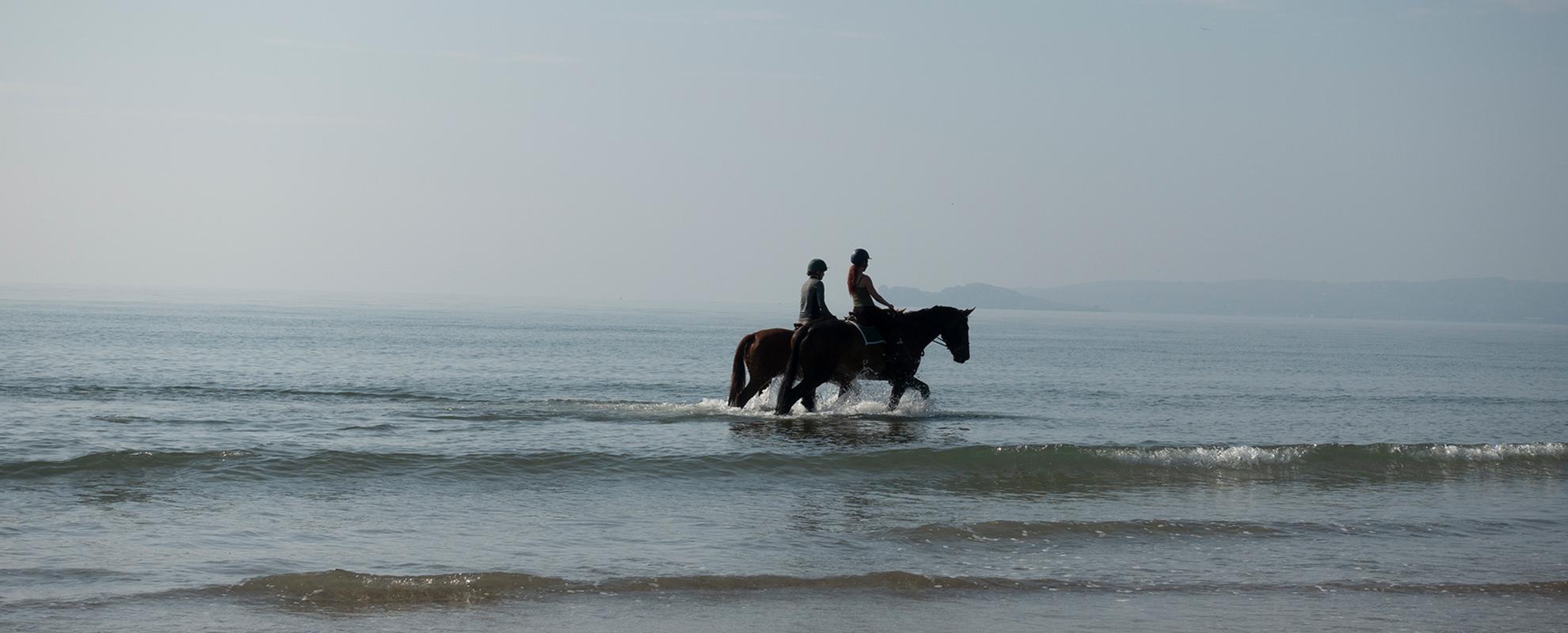 horses on the sunny morning beach